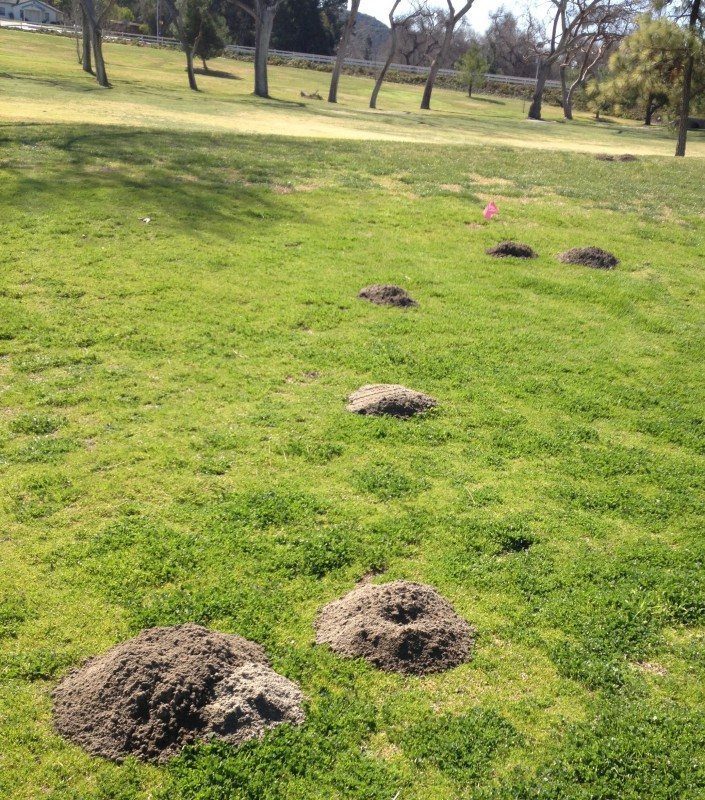Los Angeles Gopher Control In Orange County, Thousand Oaks ...