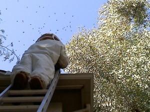 Beehive Treatment